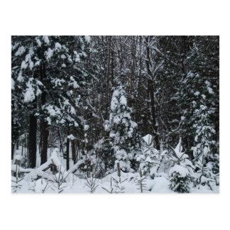Árboles nevados postales