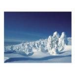 Árboles nevados tarjetas postales