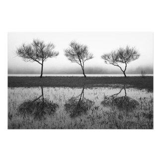 Árboles por el lago fotos