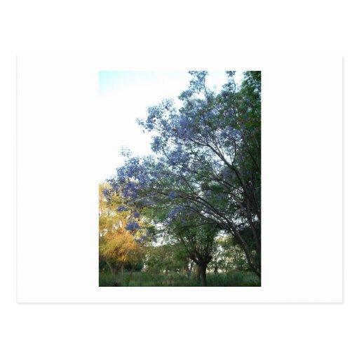 árboles postales