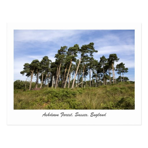 Árboles que se inclinan en la postal del bosque de