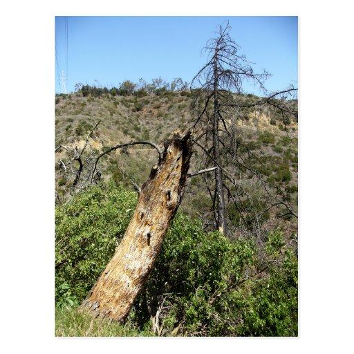 Árboles quemados en Parque Griffith Postales