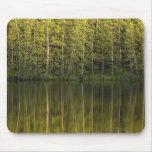 Árboles reflejados en el agua mousepad