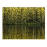Árboles reflejados en el agua postal