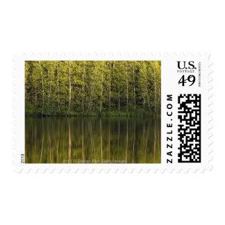 Árboles reflejados en el agua sello