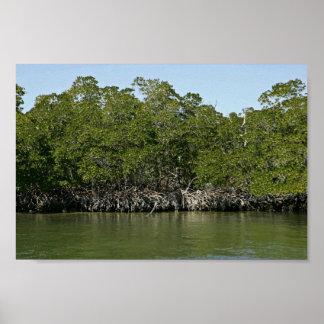 Árboles rojos del mangle en el borde del agua póster