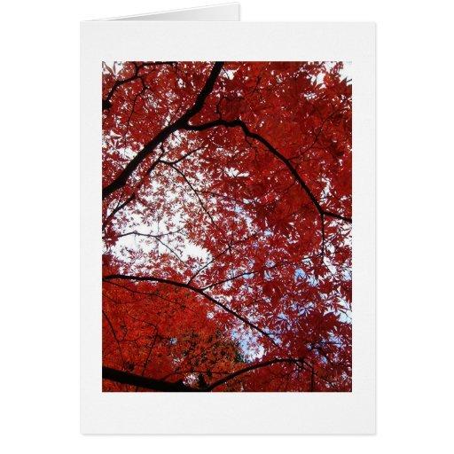 árboles rojos felicitacion