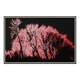 Árboles rosados foto