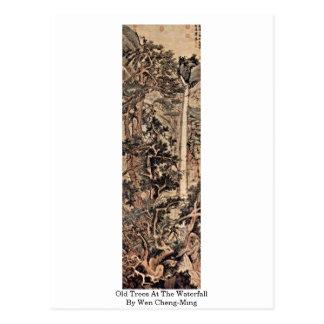 Árboles viejos en la cascada de Wen Cheng-Ming Tarjetas Postales