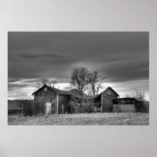 Árboles viejos HDR blanco y negro del invierno del Impresiones