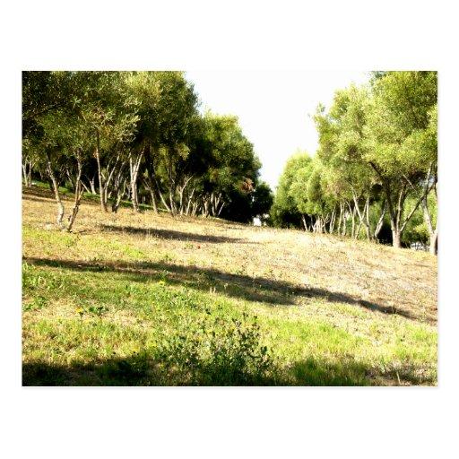Árboles vivos postales