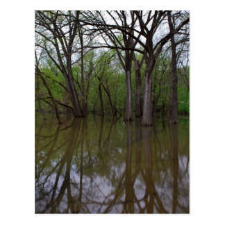 Árboles y agua postal