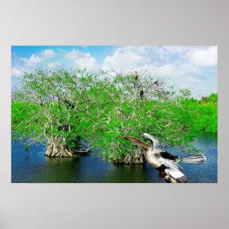 Árboles y Anhinga, marismas del mangle de la Flori Póster