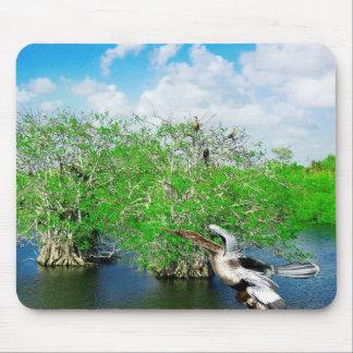 Árboles y Anhinga, marismas del mangle de la Flori Alfombrillas De Raton