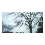 Árboles y cielo (PhotoCard) Plantilla Para Tarjeta De Foto