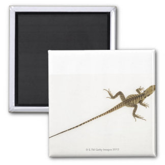 Arboreal agamid species native to Eastern 2 Inch Square Magnet