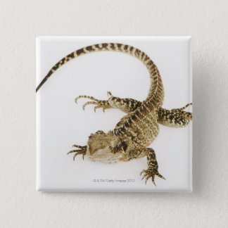 Arboreal agamid species native to Eastern 2 Pinback Button
