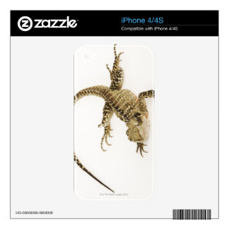 Arboreal agamid species native to Eastern 2 Skin For iPhone 4S