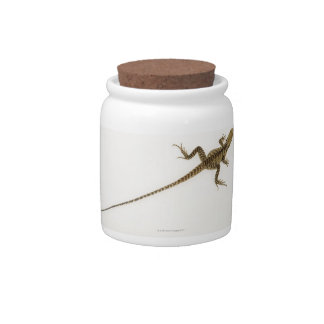 Arboreal agamid species native to Eastern Candy Dishes