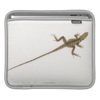 Arboreal agamid species native to Eastern iPad Sleeve