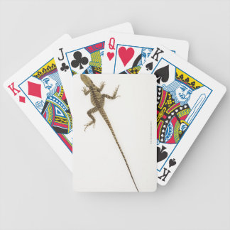 Arboreal agamid species native to Eastern Bicycle Playing Cards