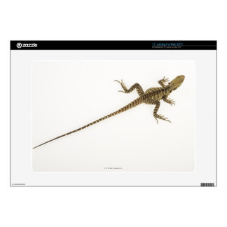 Arboreal agamid species native to Eastern Skins For Laptops