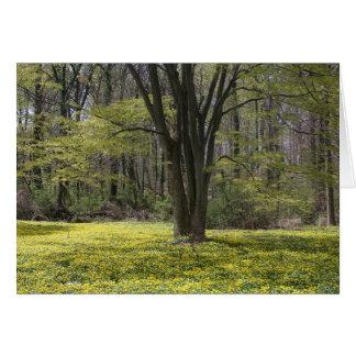 Arboreto del nacional de los E.E.U.U. Tarjeton