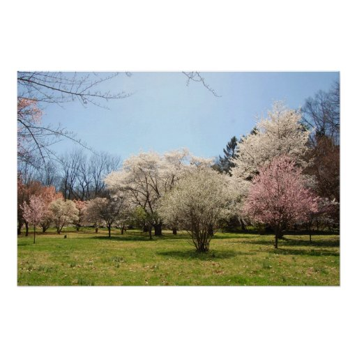Arboretum: Mix of Flowering Trees Poster