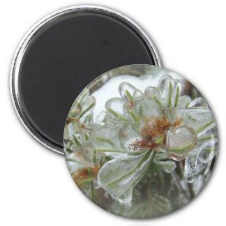 Arborvitae Tips in Ice Magnet