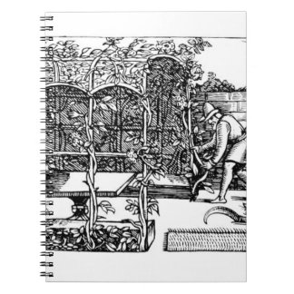 Arbour being built as a shade against the sun, fro journals