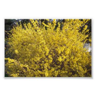Arbusto amarillo brillante arte fotografico