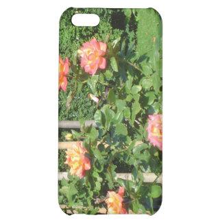 Arbusto color de rosa