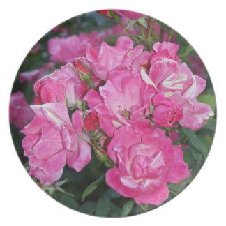 Arbusto color de rosa rosado - placa platos