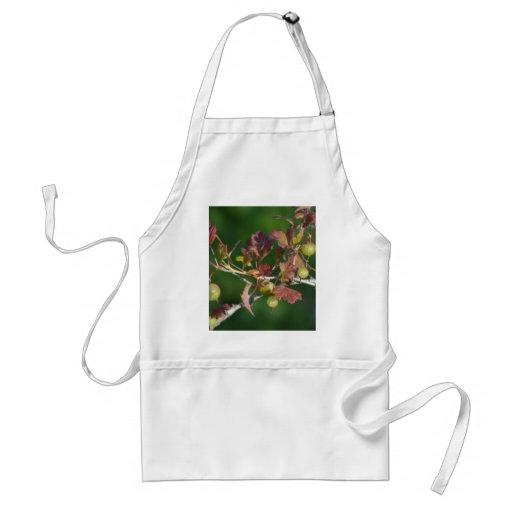 Arbusto de grosella espinosa con las hojas púrpura delantal