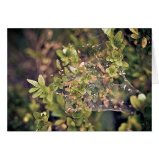 Arbusto de la hiedra tarjetas