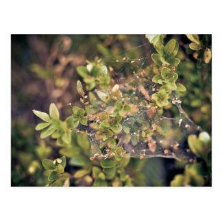 Arbusto de la hiedra postal