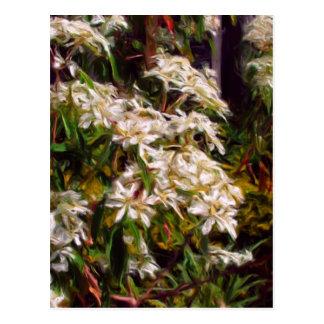 Arbusto del copo de nieve en aceites tarjetas postales