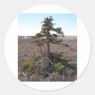 arbusto del kotz en Alaska Pegatina Redonda
