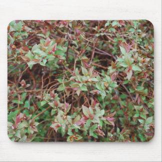 Arbusto Mousepad - 1 del arbolado