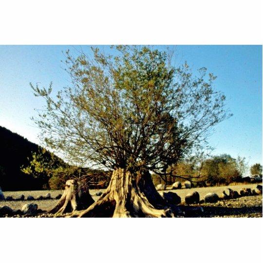 Arbusto que crece de tocón de árbol fotoescultura vertical