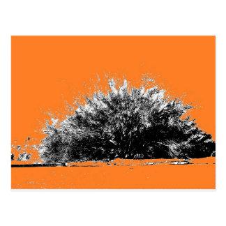 Arbusto salvaje del desierto con el naranja postal