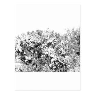 Arbusto salvaje y borroso del desierto postal