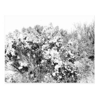 Arbusto salvaje y borroso del desierto postales