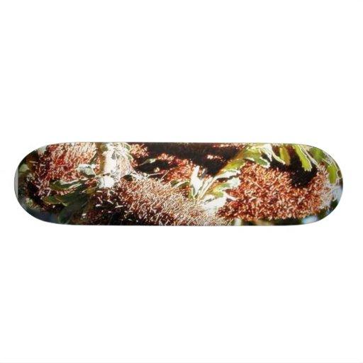 Arbustos 4 tabla de skate