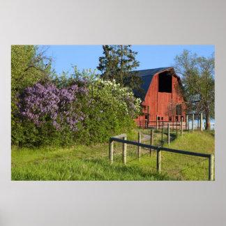 Arbustos de lila en la floración y urracas en los  póster