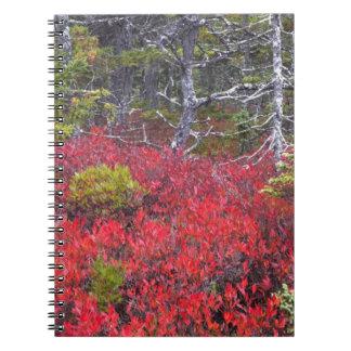 Arbustos y pinos de arándano spiral notebooks