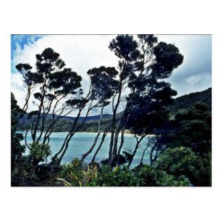 Arbustos y playa, isla de Manuka de Stewart Postales