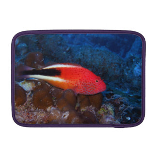 Arc-Eye Hawkfish MacBook Sleeve