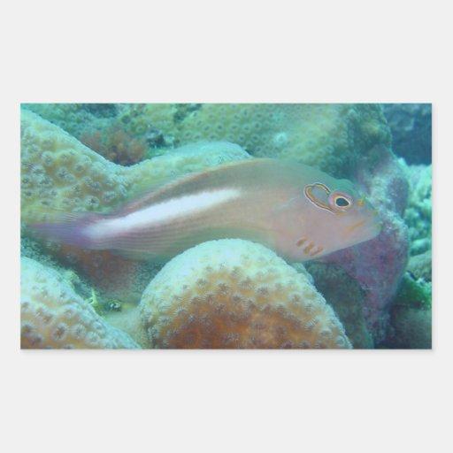 Arc Eye Hawkfish Rectangular Sticker