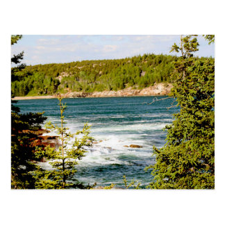 Arcadia National Park Through the Trees Postcard